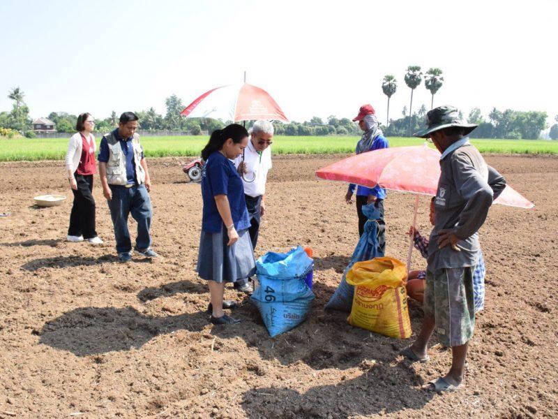 สิงห์บุรี  เกษตรจังหวัดสิงห์บุรีชวนปลูกพืชใช้น้ำน้อยแทนการทำนาปรัง
