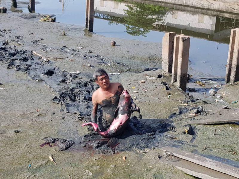 สมุทรสาคร  พบซากโลมาน้อยตายเกยตื้นริมแม่น้ำท่าจีน