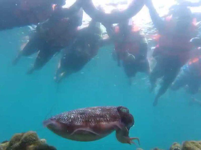 นักท่องเที่ยวหนีหนาวลงใต้ท่องทะเลตรัง ดำน้ำดูปะการังที่แสนสวยงามตามเกาะต่างๆ ในจ.ตรัง