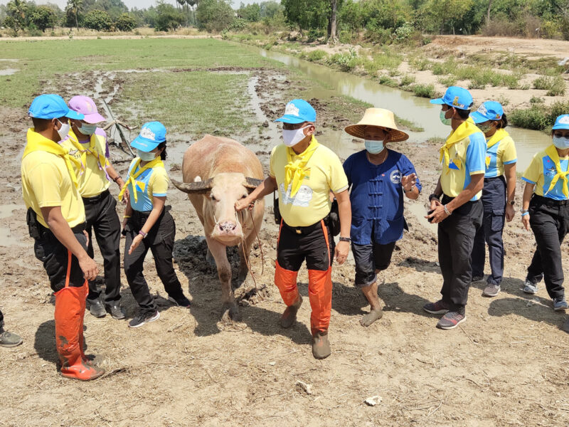 สุพรรณบุรี ผู้บัญชาการกองกำลังจิตอาสาพระราชทานติดตามโครงการธนาคารโคกระบือ